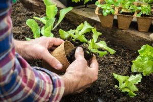 How to prevent gardening back pain