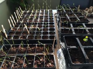 Growing my own Seedlings