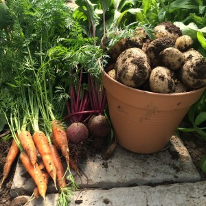 Root Vegetables from the Poly